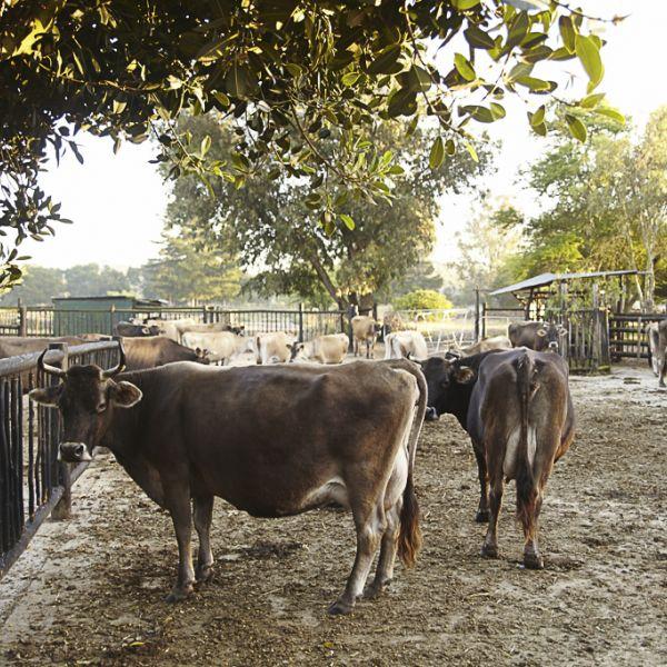 Camphill Village Dairy 02