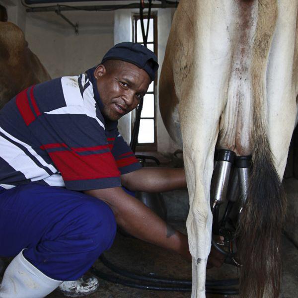 Camphill Village Dairy 03