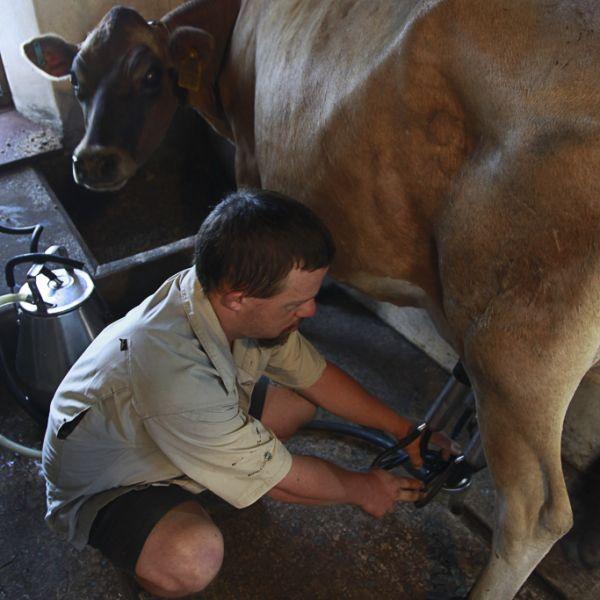 Camphill Village Dairy 05