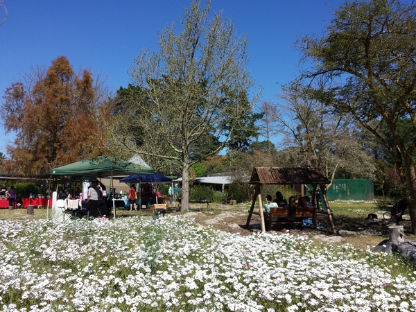 camphill market with spring daisies