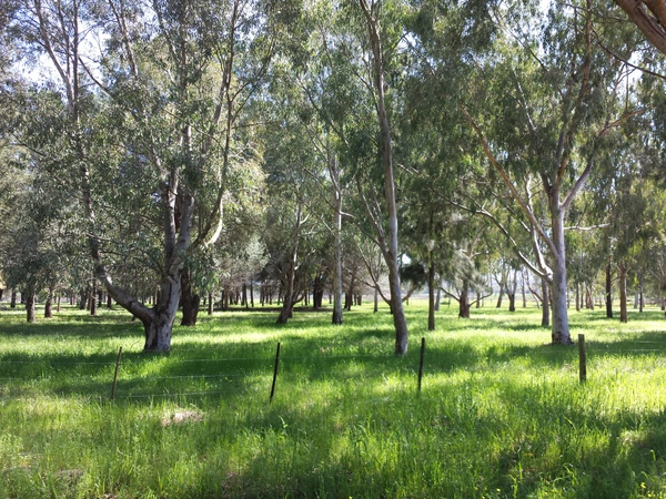 camphill village spring green