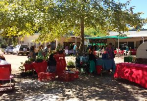 camphill-market-feb.jpg