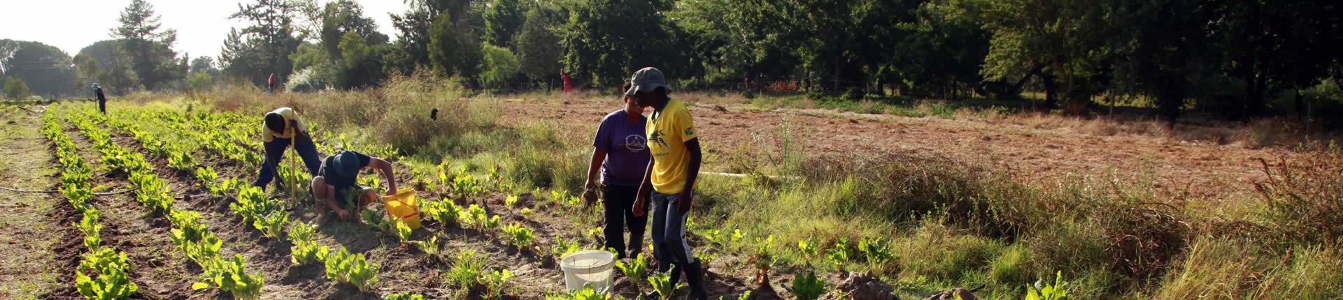 Camphill farm, working in the fields